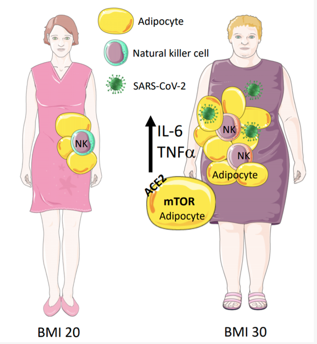 covid19 and obesity